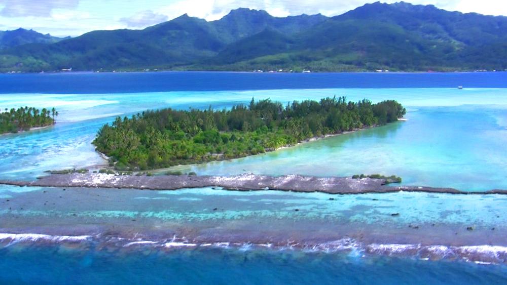 Aerial Reef View