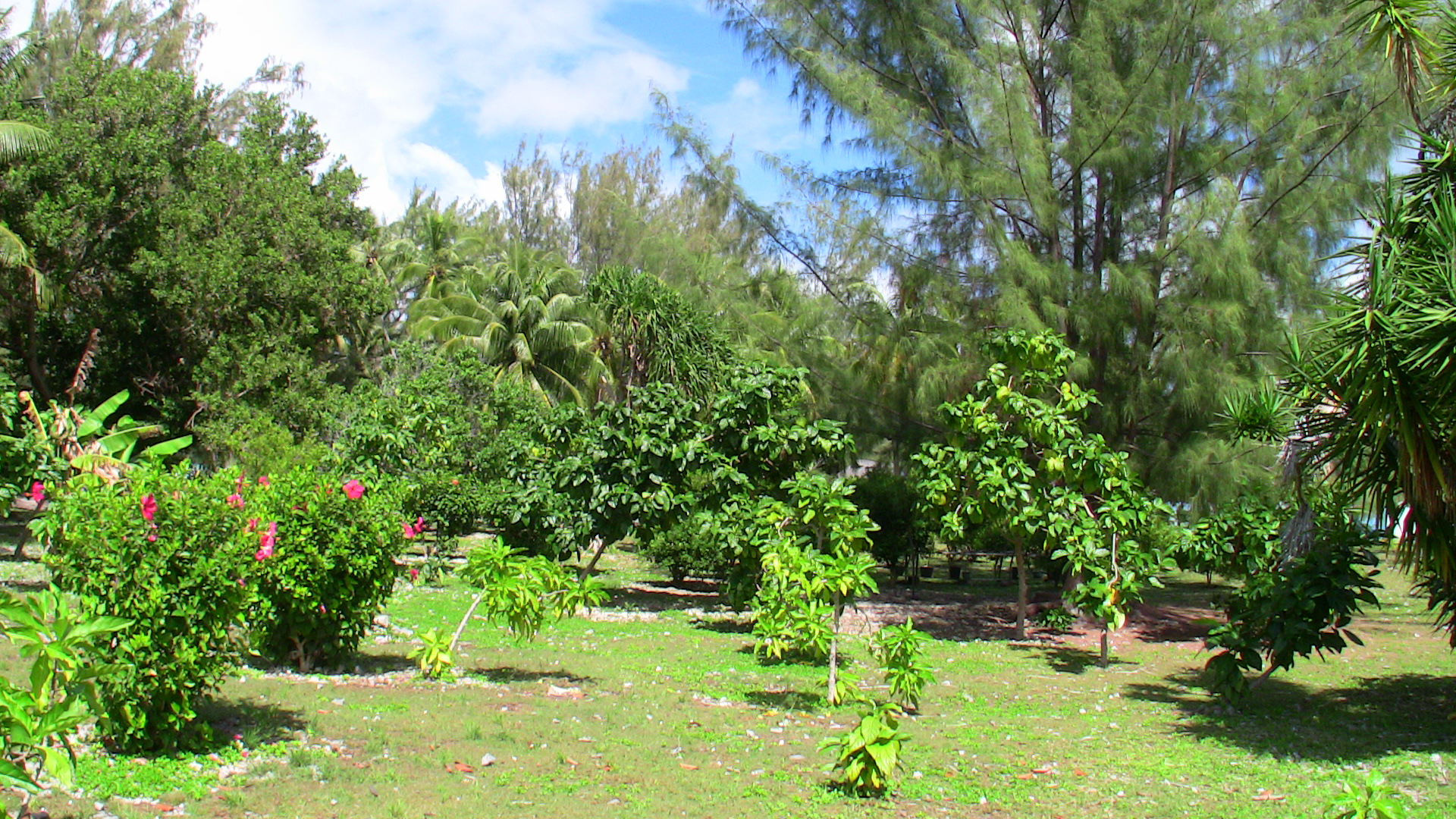 plants and trees on island center in Tahiti