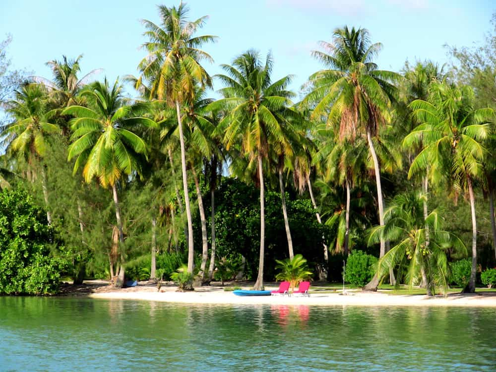 Palm covered private island for sale in Tahiti